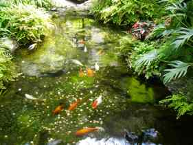 Feng Shui fish pond - photo Ranna® 2008.